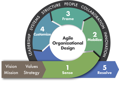 Graphic with text of steps of organizational design in a circular layout